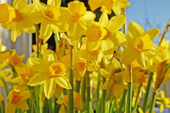 Blomster i April