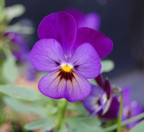Foto: opl.kontoret for blomster og planter