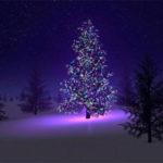 Adventstilbud Desember 2016